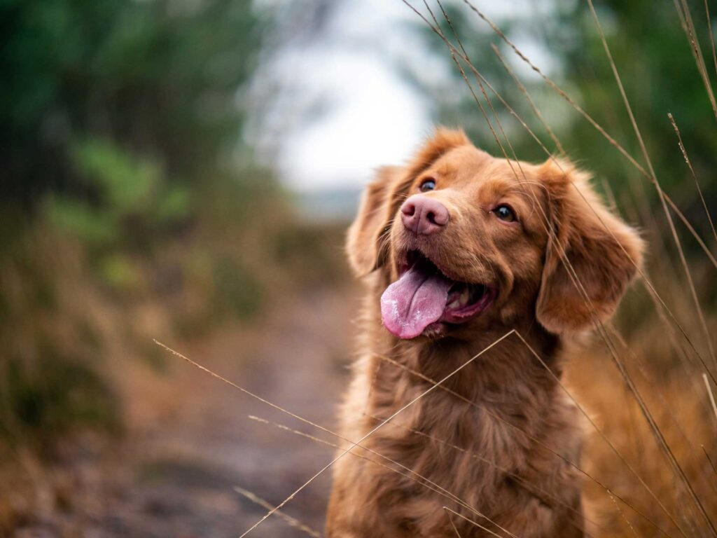 Image of a happy dog outdoors. Photo by Jamie Street on Unsplash