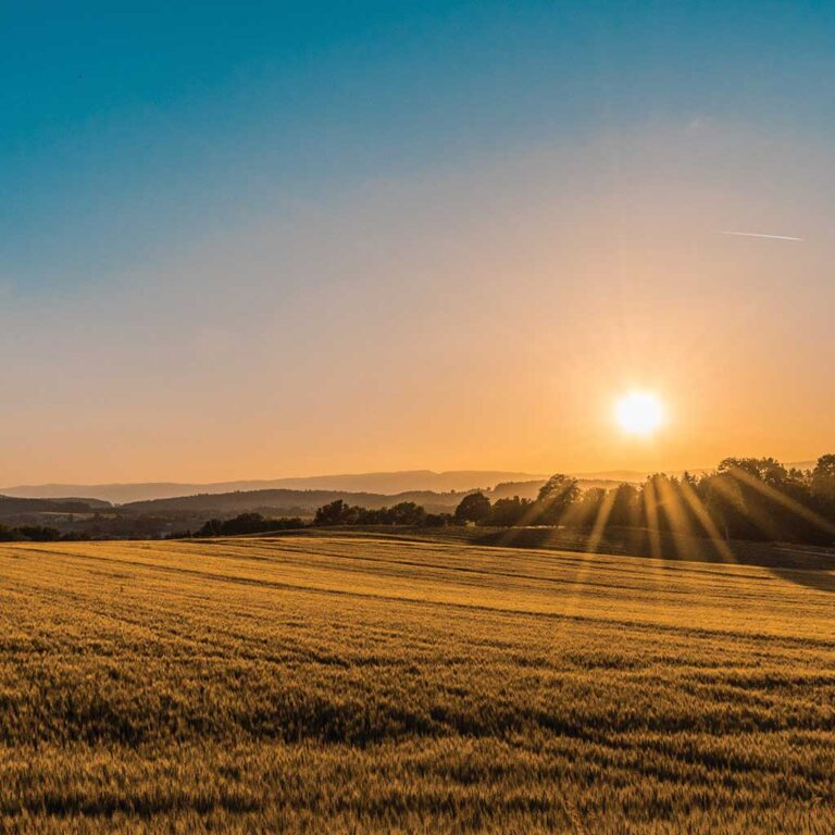 Picture of a field with the sun setting. Photo by Federico Respini.