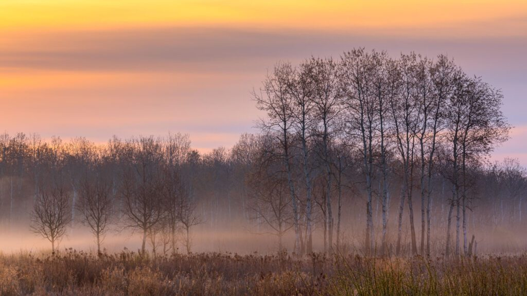 A picture showing a wetland at sunrise, with some trees and mist rising from the ground. Photo by Dave Hoefler.